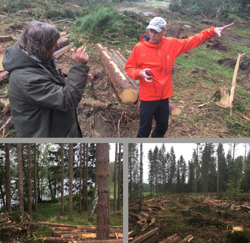skogscollage_grå_2